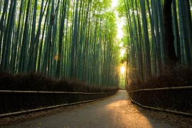 Pristine-bamboo-forest-at-sunrise-538808784_7360x4912.jpeg